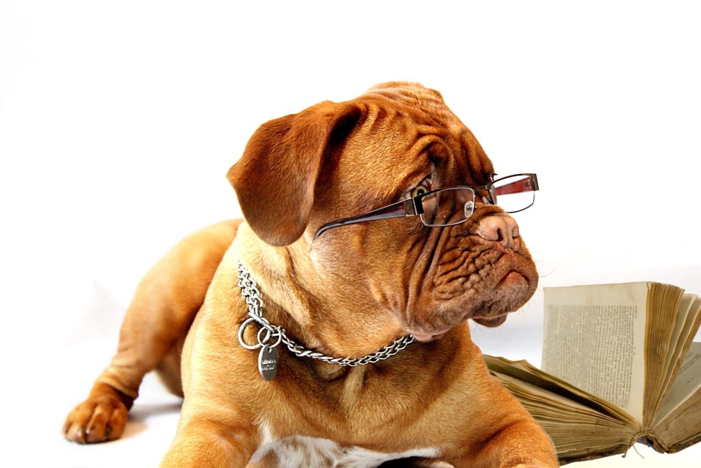 Was Hunde lernen sollten